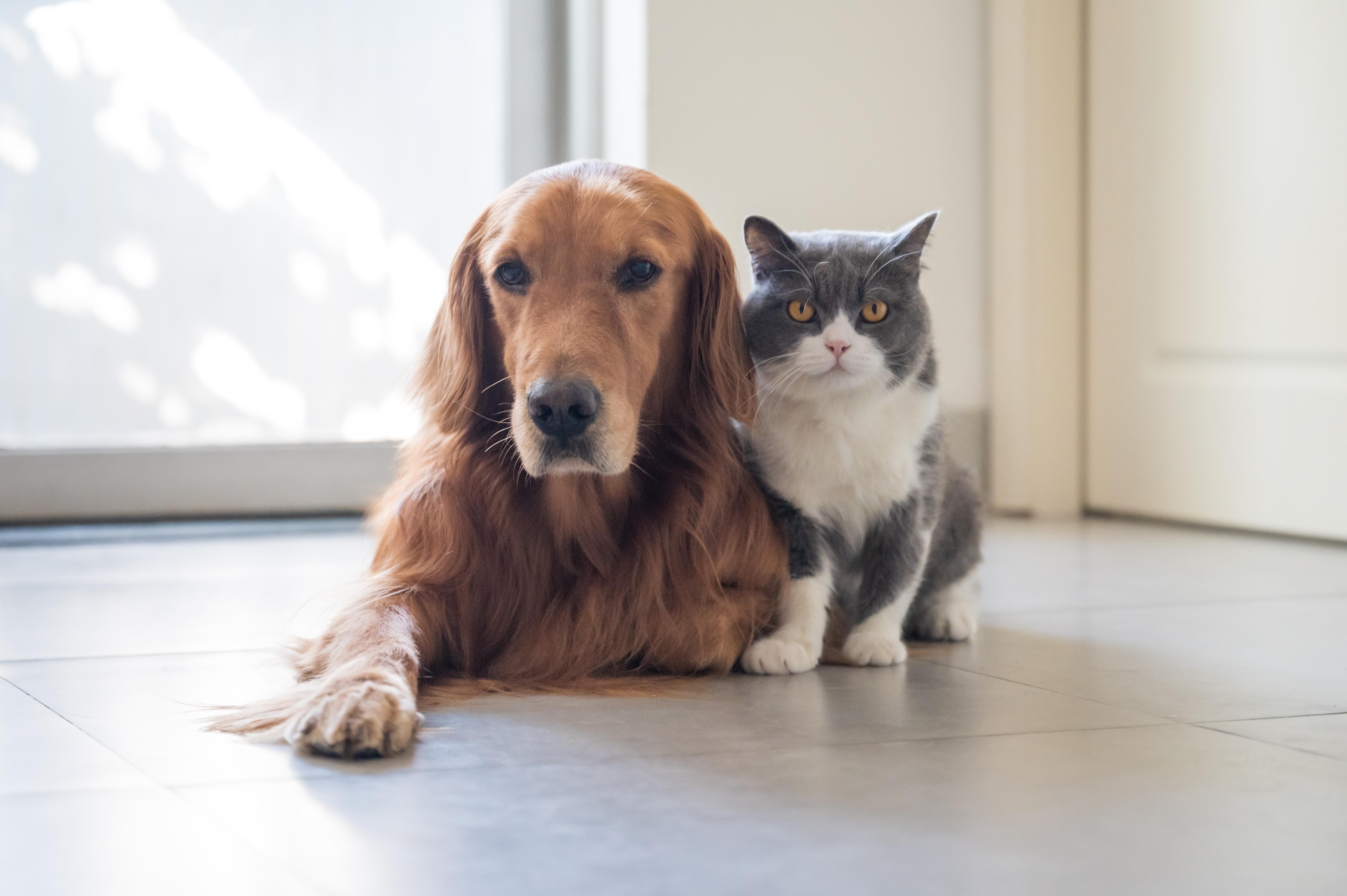 Cães e gatos um ao lado do outro.