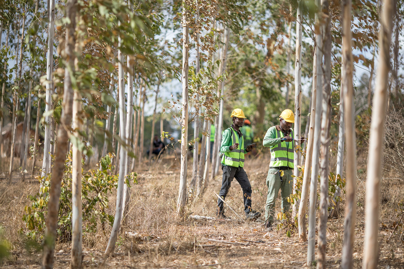 Apple 與保護國際基金會和肯亞的可持續「小規模林業」公司 Komaza 攜手合作,支援他們在減炭、生物多樣性保育和社會經濟發展方面的工作,致力帶來正面影響。