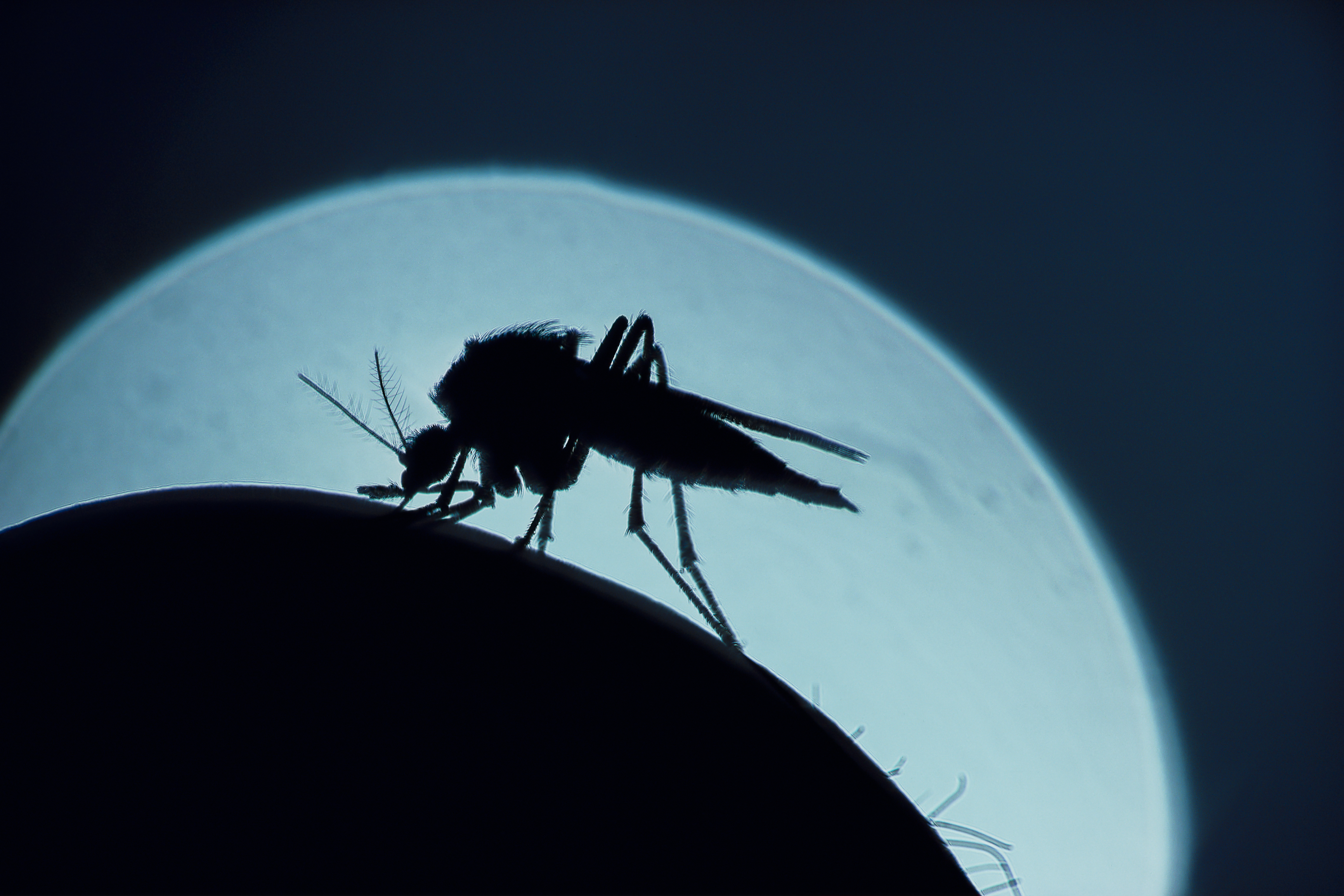 The mRNA tech we used against COVID could help us finally beat malaria   Engadget