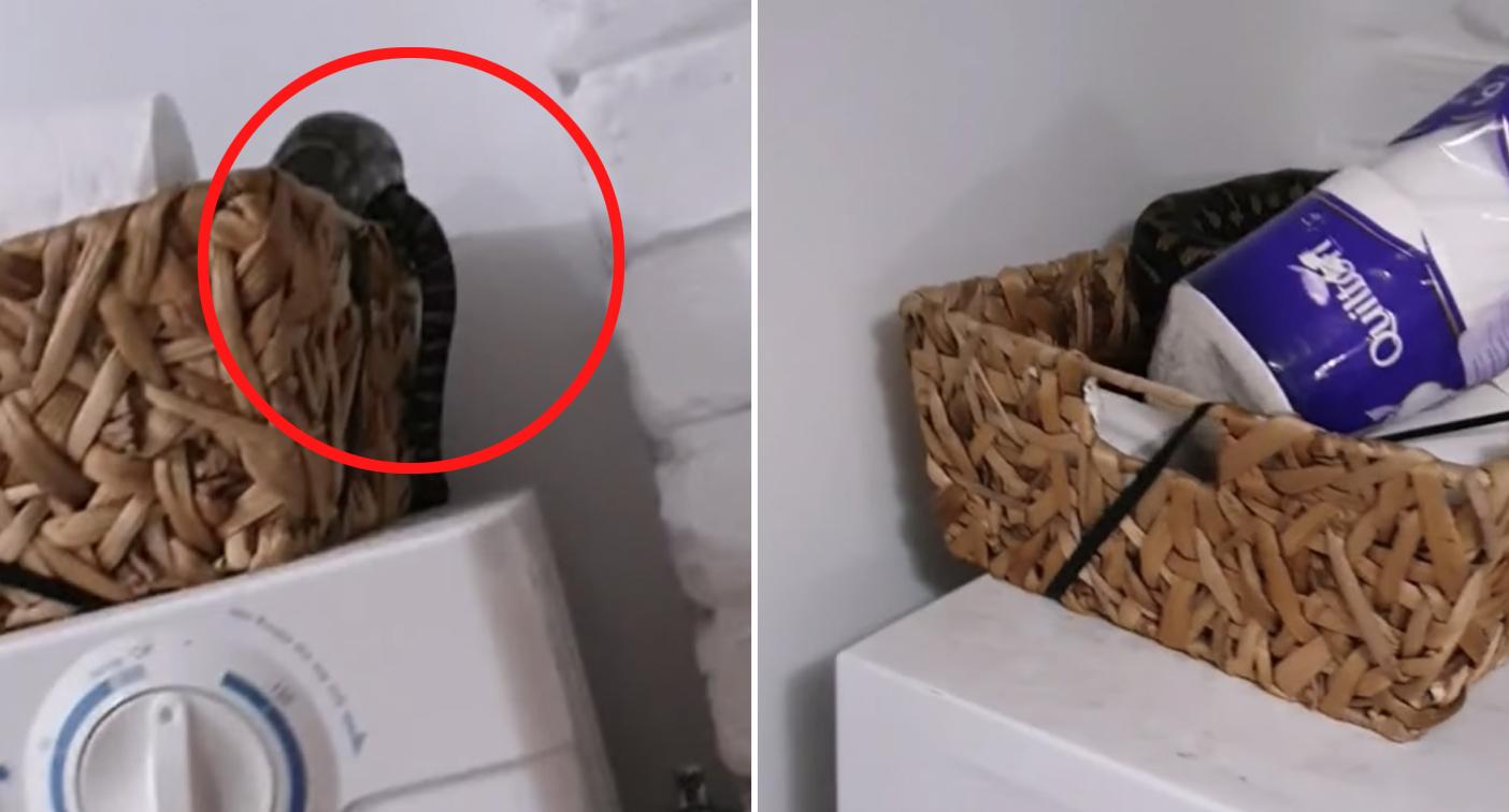 Terrifying visitor hidden in family's toilet paper basket