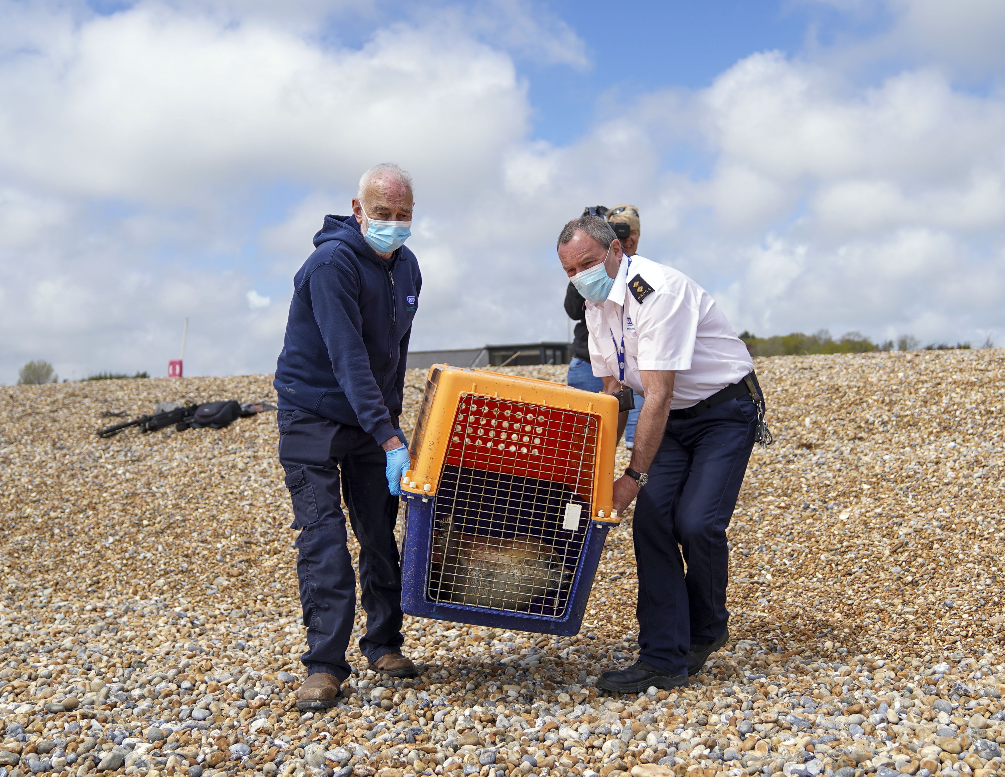 <p>Hubble, a sick Common Seal rescued from Camber Sands in April and who was treated for lungworm and rehabilitated at RSPCA Mallydams Wood Wildlife Centre, is released back into the sea at Pett Level beach near Hastings, East Sussex. Picture date: Wednesday May 12, 2021.</p>