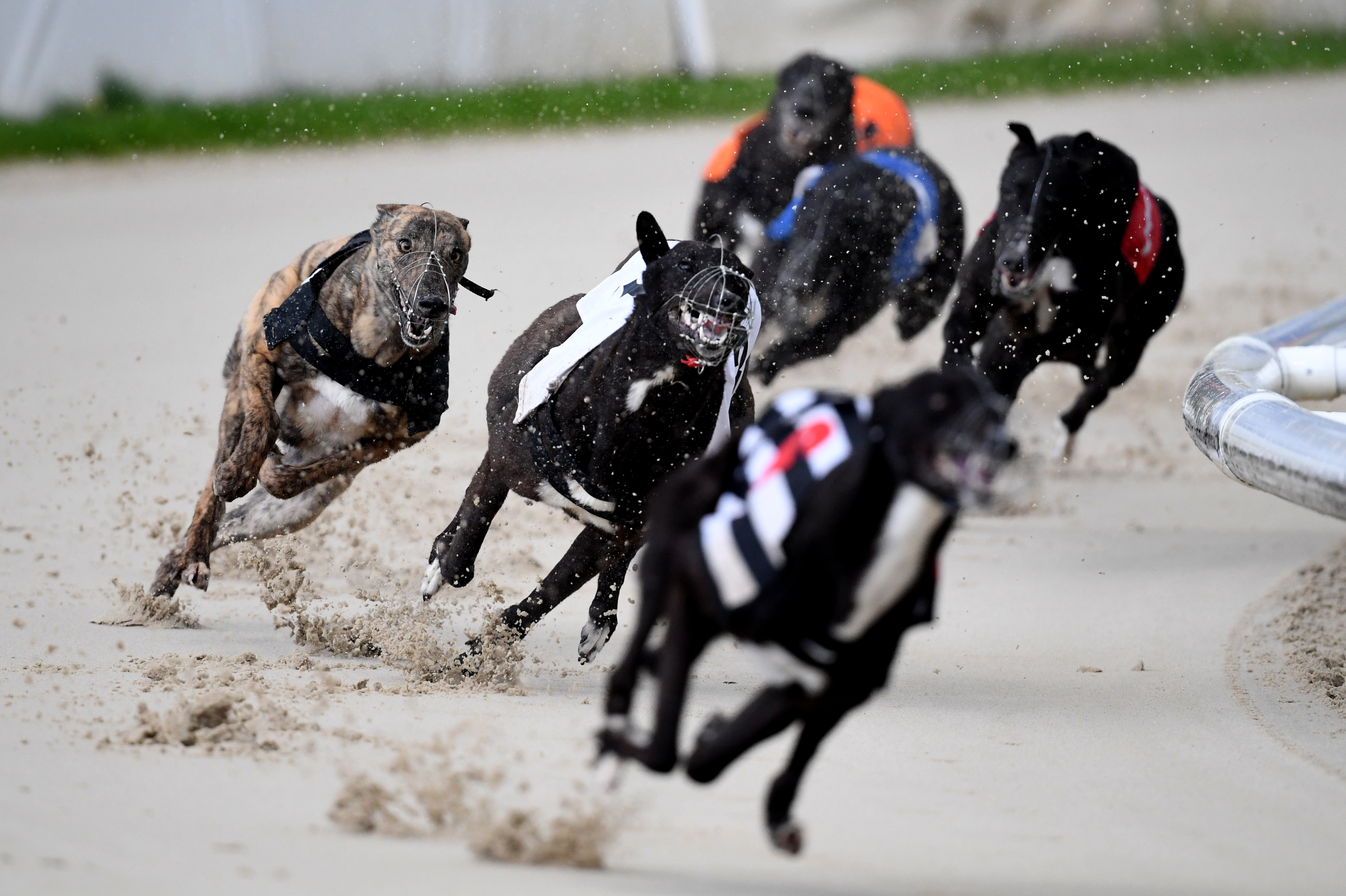 <p>Action from the 16:28 race at Coral Romford Greyhound Stadium, Romford. Picture date: Monday May 17, 2021. Fans return to sporting events following the further easing of lockdown restrictions in England. (Photo by Kirsty O'Connor/PA Images via Getty Images)</p>