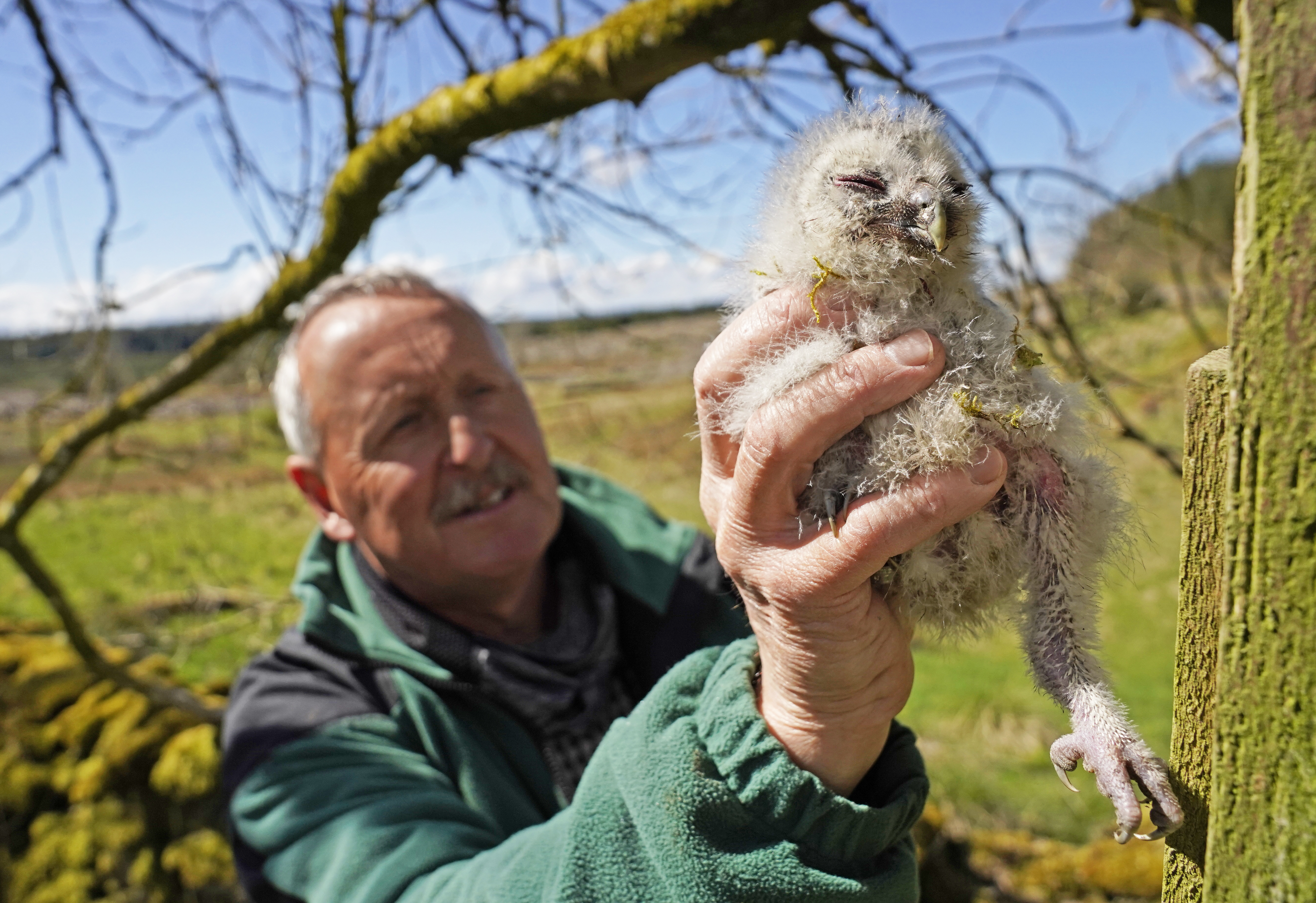 <p>Martin Davison, ornithologist for Forestry England, rings a baby tawny owl chick in Kielder Forest, Northumberland, where wildlife experts are continuing to work on the UK's longest running study of the birds. Picture date: Wednesday May 19, 2021.</p>