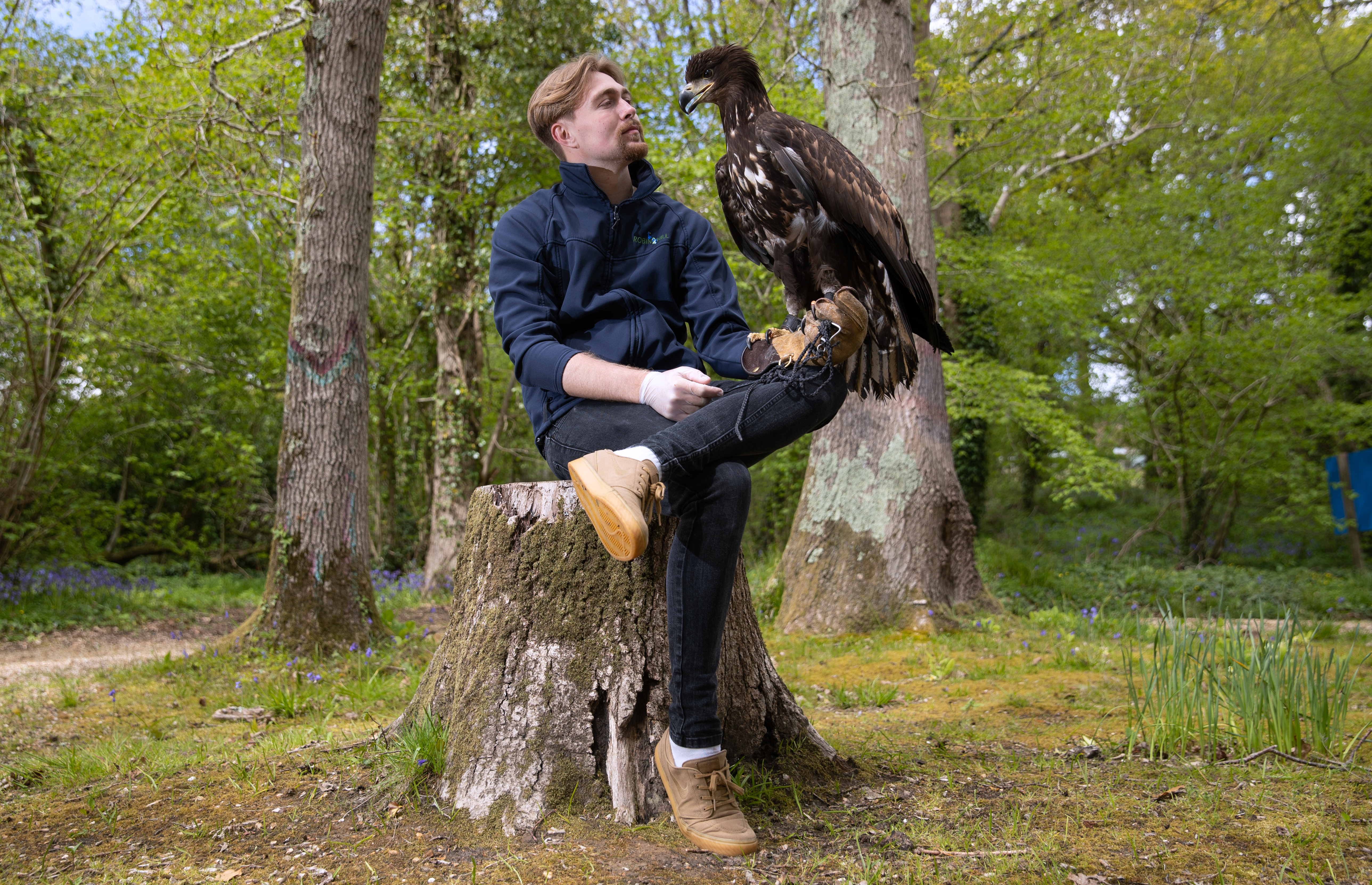 <p>EMBARGOED TO 0001 THURSDAY MAY 13 Falconer Charlie Rolle holds Chief, a 10-month-old white-tailed sea eagle, which is the UK's largest bird of prey and a species extinct around 200 years ago, at his new home at the nature and tourist destination, Robin Hill Park, near Newport on the Isle Of Wight. Picture date: Wednesday May 12, 2021.</p>