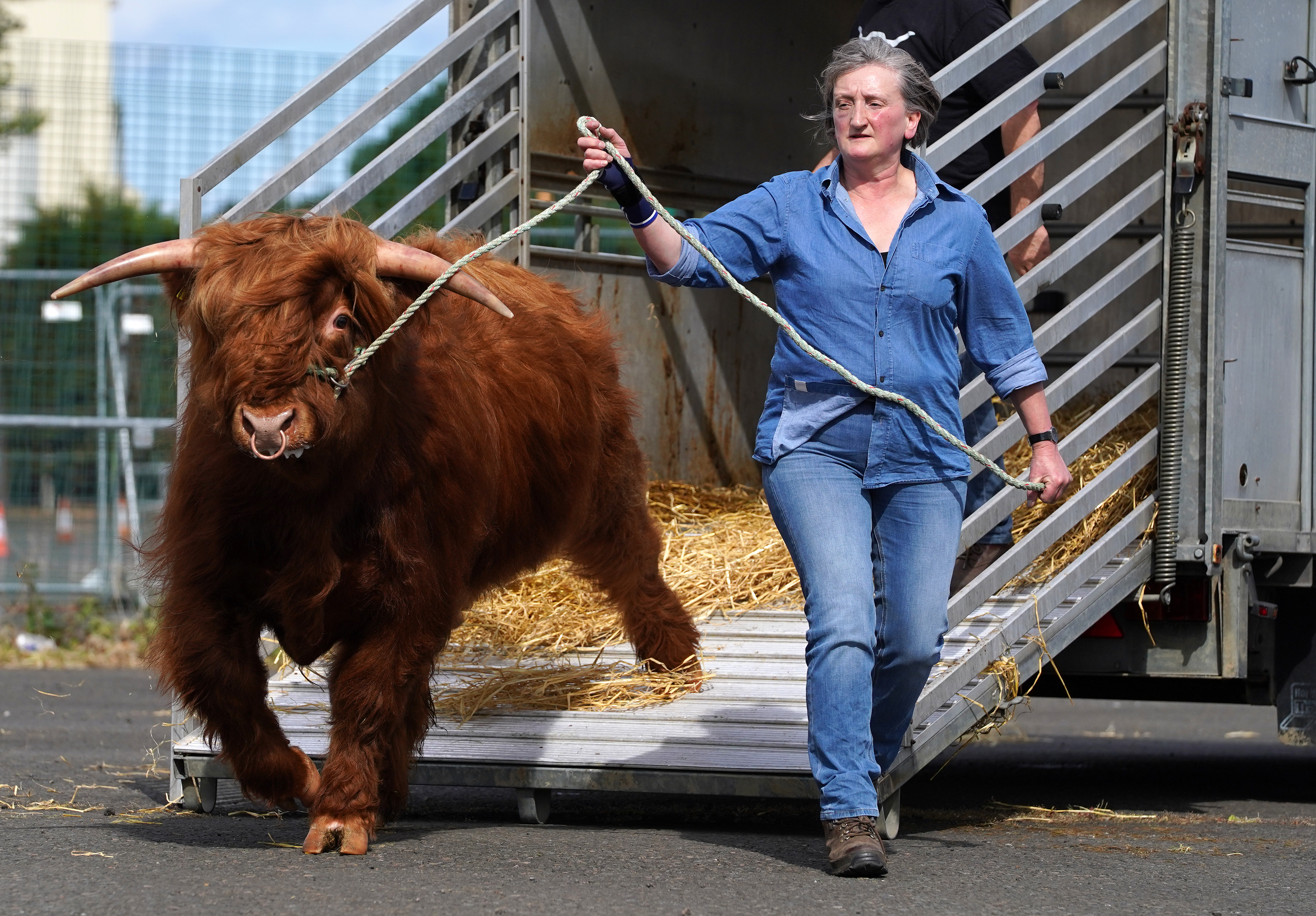 <p>Maureen MacArthur from Allanfearn farm near Inverness with her Highland Cattle as they arrive at the Royal Highland Show in Edinburgh. Due to the covid restrictions this years event which starts tomorrow is being held online. Picture date: Sunday June 13, 2021. (Photo by Andrew Milligan/PA Images via Getty Images)</p>
