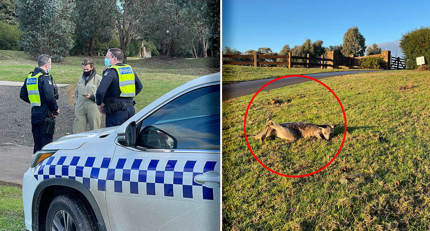'Deeply troubled': Multiple kangaroos found dead at golf course – Yahoo News Australia