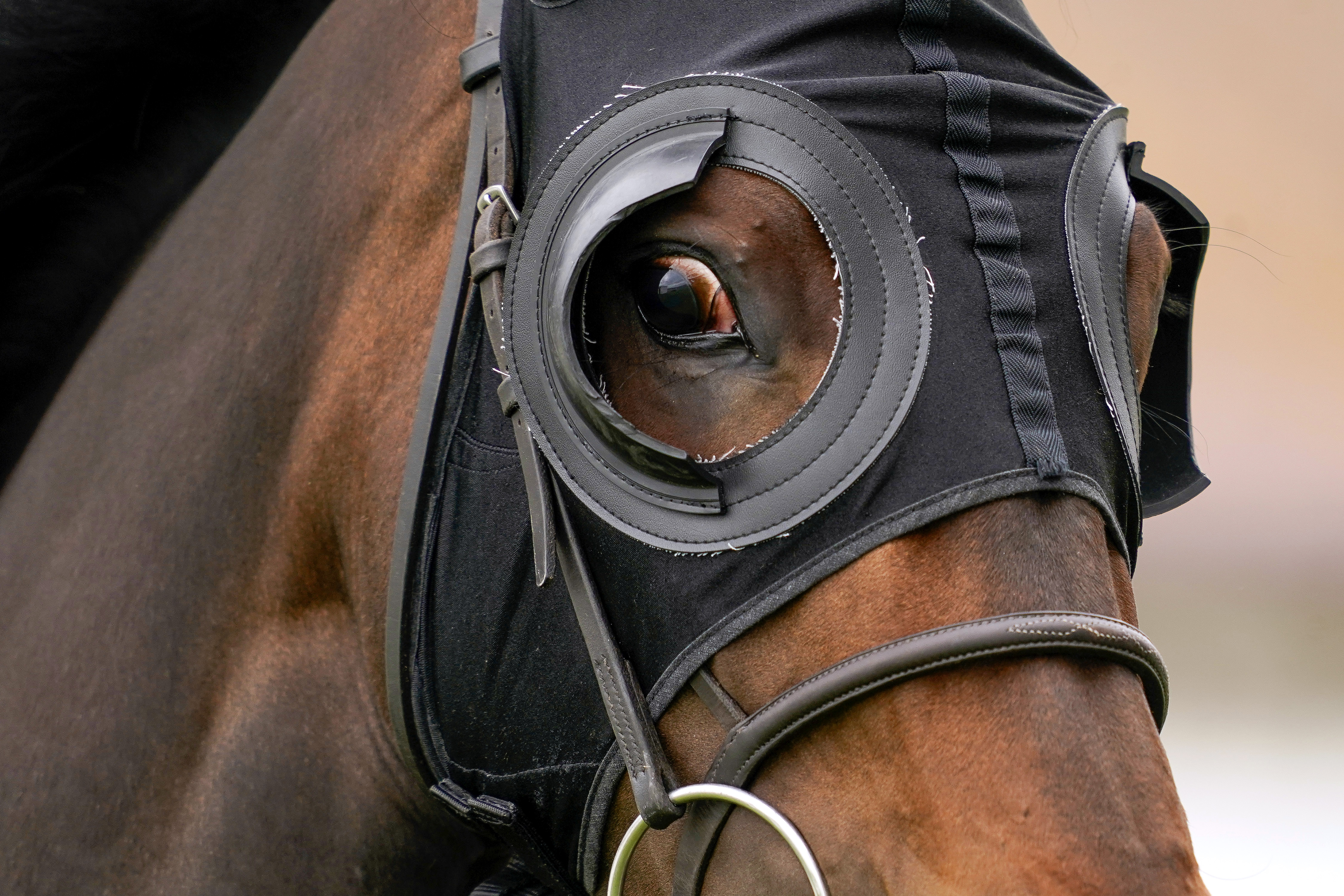 <p>A runner wearing blinkers at Brighton racecourse. Picture date: Tuesday June 22, 2021.</p>