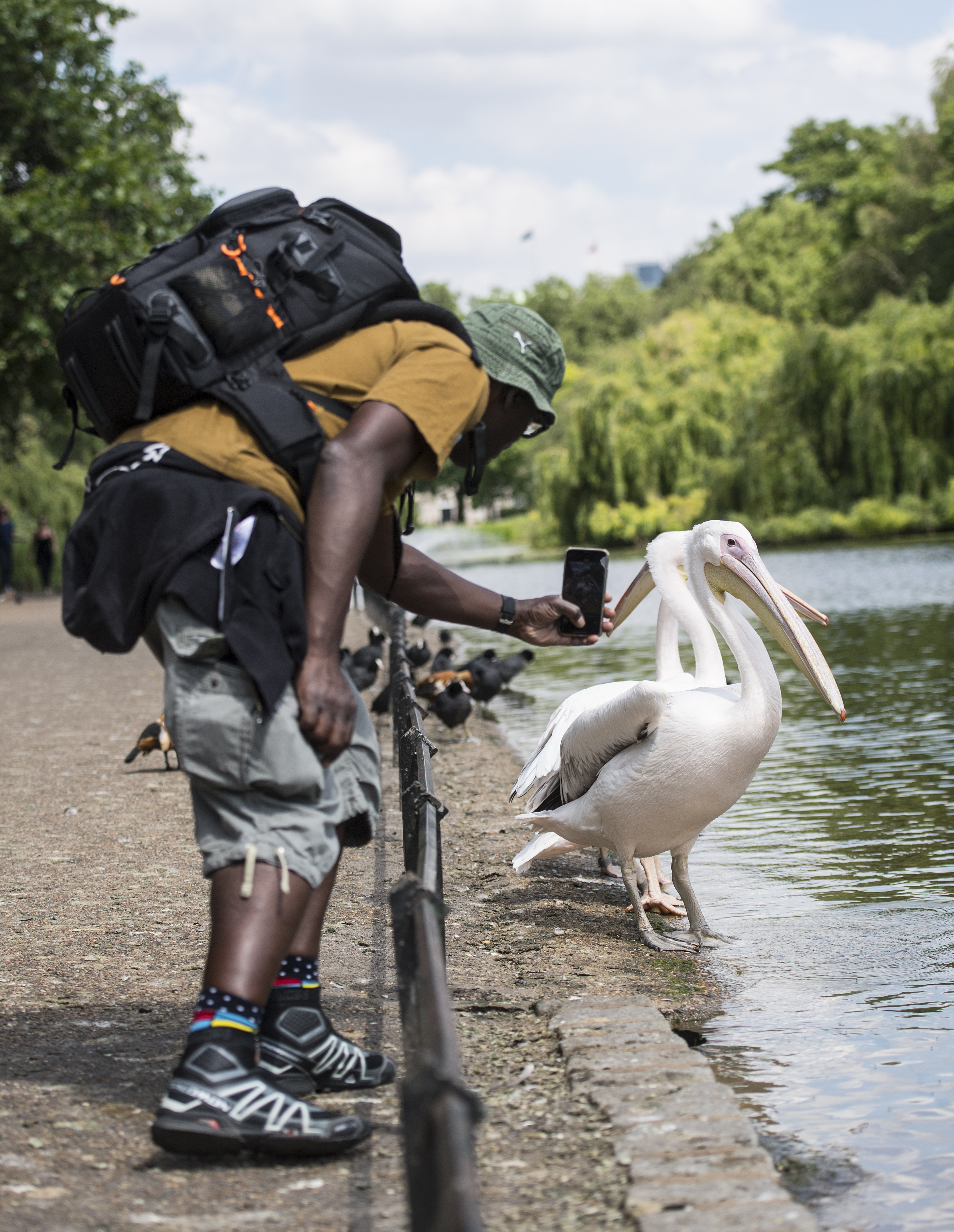 <p>A man takes pictures of the Pelicans in St James Park, London. Wednesday could be the hottest day of the year so far as parts of the UK are set to bask in 30-degree heat. Picture date: Wednesday June 16, 2021.</p>