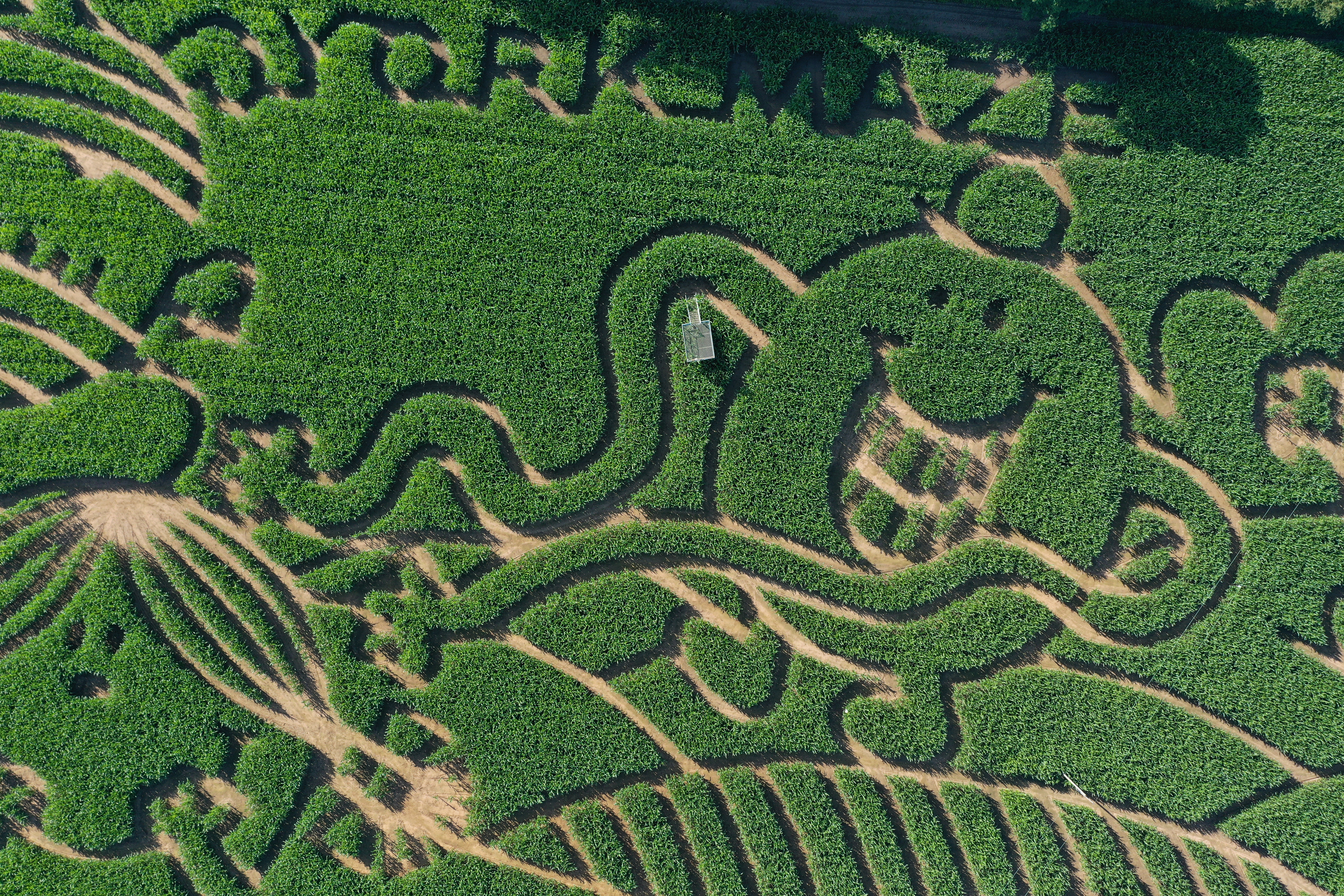 <p>The 2021 York Maze in York, North Yorkshire, created from over one million living, growing maize plants, which this year celebrates 50 years of Mr Men and Little Miss. Picture date: Friday July 16, 2021.</p>