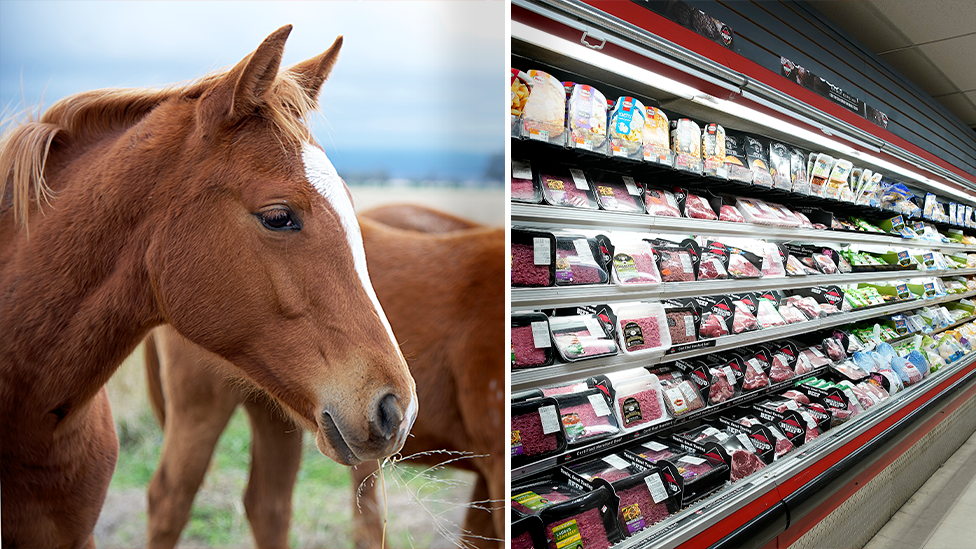 Horse meat linked to 21 dog deaths across Aussie state