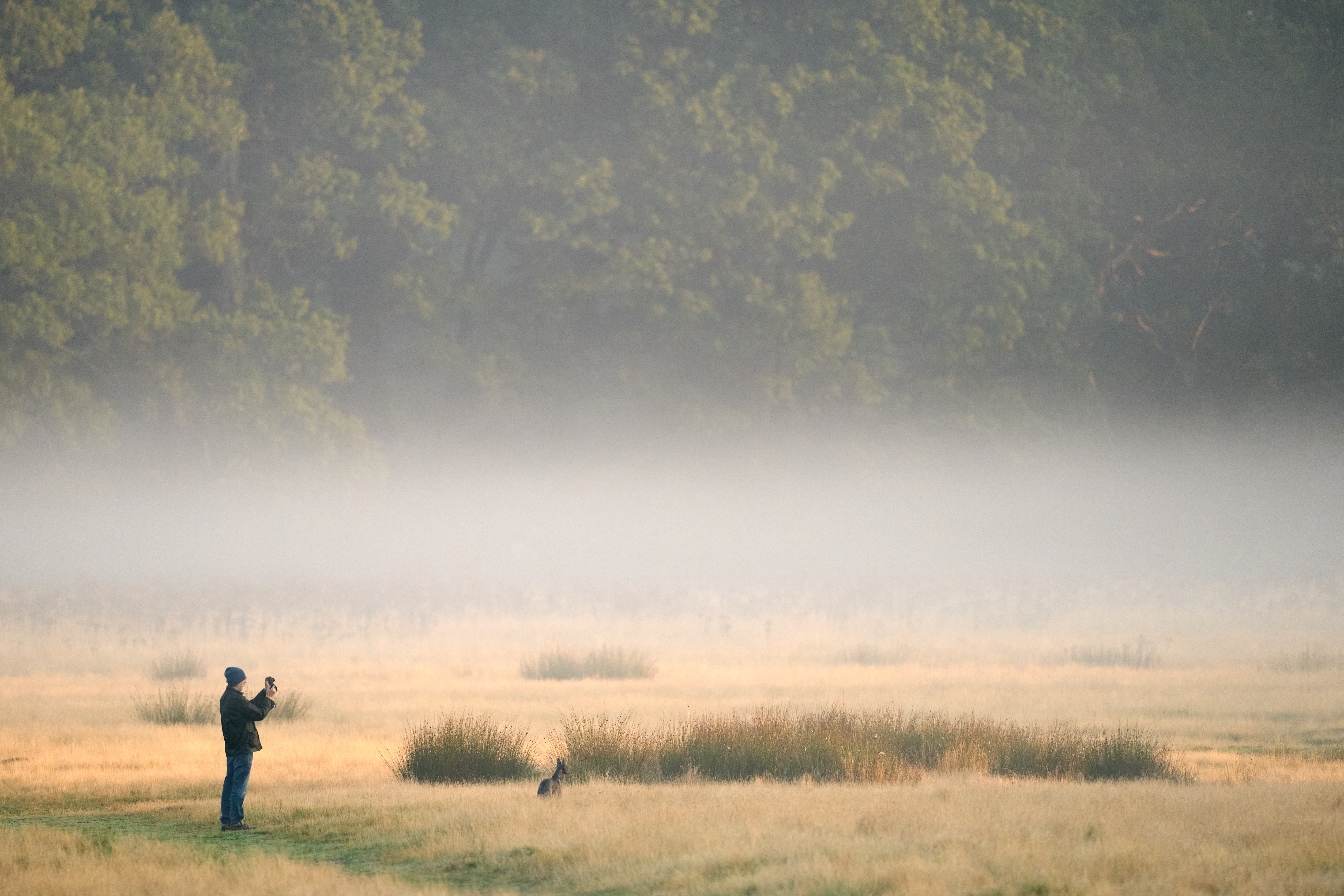 <p>A dog walker takes a photograph of the early morning mist in Richmond Park, London. Picture date: Thursday September 16, 2021.</p>