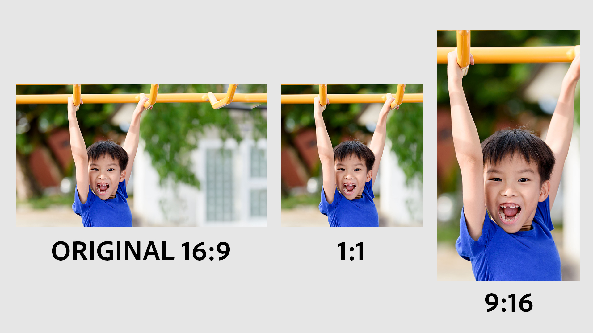 Adobe Elements gains new AI smarts for auto re-framing, pet photo fixes and more