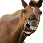 Horse's Mouth 4: 'Super Fun Night,' David Chase, Donkey Tongue, And More