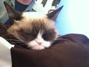 Hollywood's Rising Media Star Grumpy Cat Sparks Feline Frenzy at Kitson