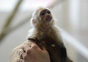 Justin Bieber Spanked Over Monkey Lodging Fees