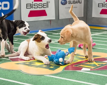 Puppy Bowl Is Back -- Now With Hedgehogs