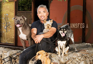Cesar Millan | Photo Credits: Nat Geo