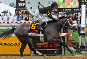 Preakness Horse Racing | Photo Credits: Mike Stewart