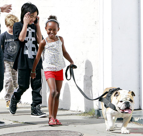 Awww! Jolie-Pitt Kids Walk Pet Bulldog, Jacques