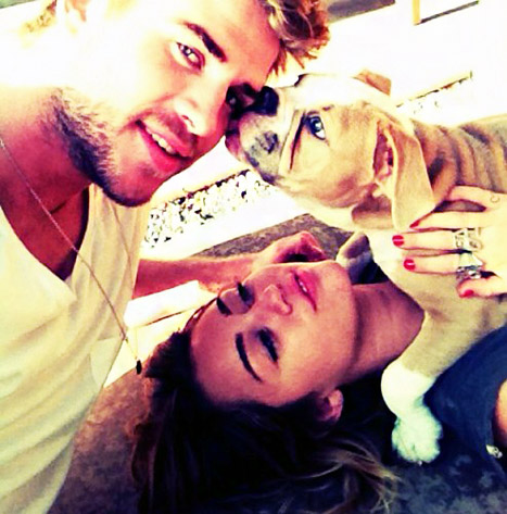 Aww! Miley Cyrus, Liam Hemsworth Pose for Family Portrait With Their Puppy