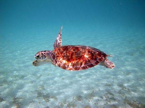 Snorkeling in Our U.S. National Parks? Three Ideal Parks to Experience Life Underwater