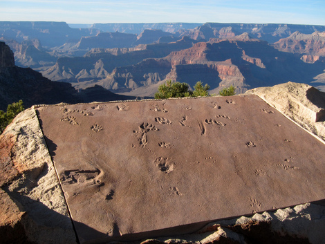 A National Parks Fossil Tour for RV Campers
