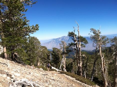 Three Best Outdoor Activities in San Bernardino National Forest