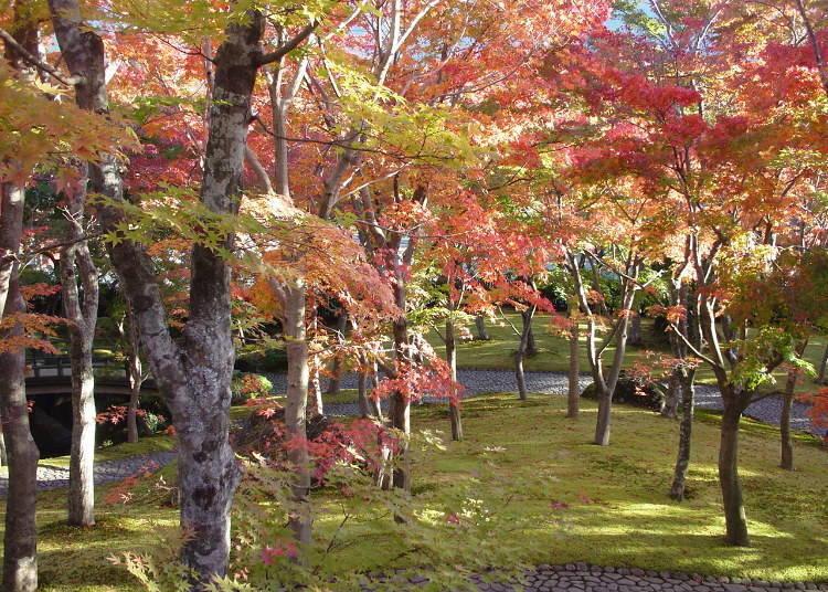 紅葉的苔庭