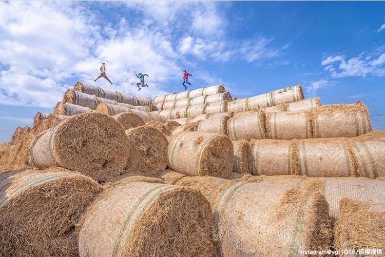 雲林虎尾鎮「金億陽農場」的稻草捲景色,十分特別!圖:翻攝自instagram ygt1016/開放權限