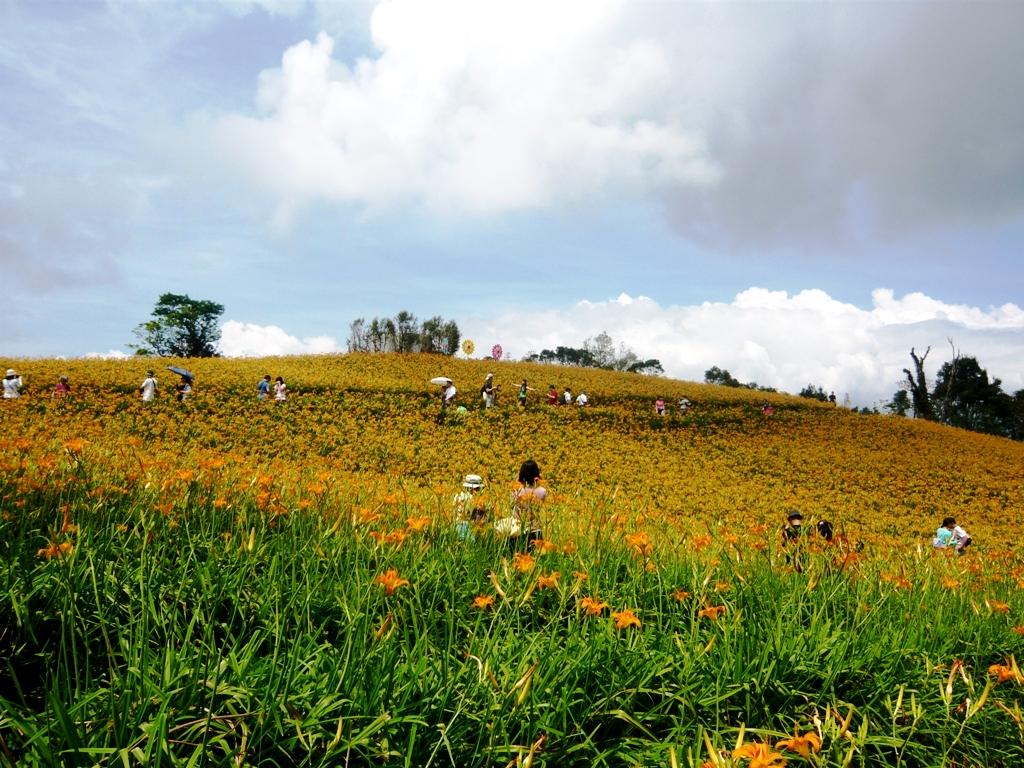 8月已進入夏季金針花盛開季節,民眾可以趁著暑假的赤科山走走。圖:台鐵/提供