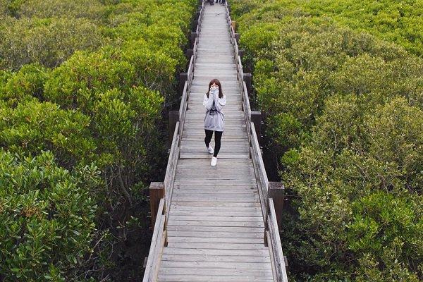 新竹紅毛港的紅樹林遊憩區 (圖/miss261900)