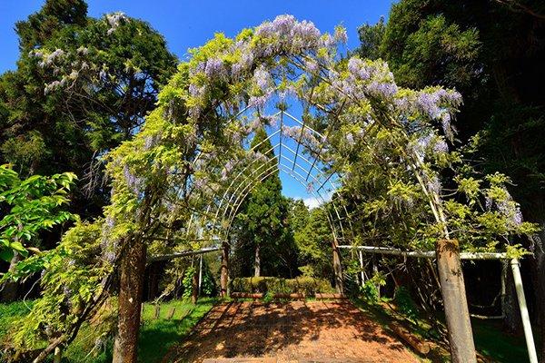 高山植物園 (圖/漫步在雲端的阿里山)