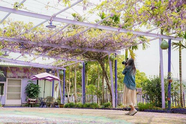 噢哈娜紫藤花海咖啡廳 (圖片來源/噢哈娜咖啡屋)