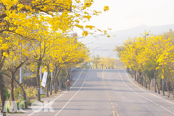 芬園寶藏寺金黃大道 (圖片提供/bb211019)