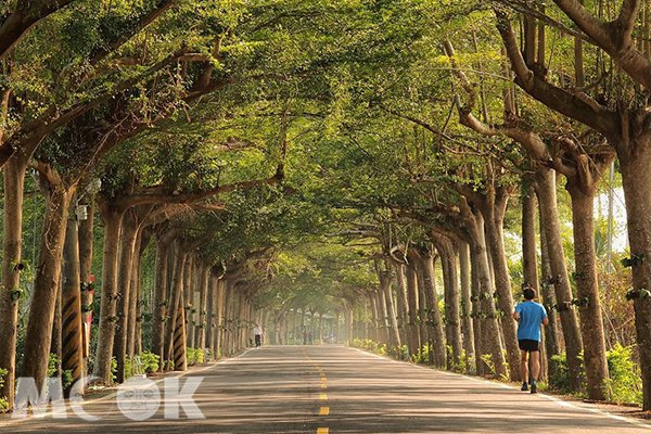 泗林綠色隧道好似奇幻的綠色世界 (圖片提供/crazyuno4747)