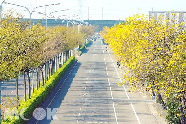 彰化溪州僑義國小金黃大道 (圖片提供/bb211019)