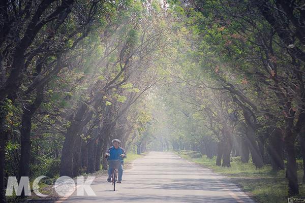 東螺溪苦楝樹自行車道 (圖片提供/bb211019)