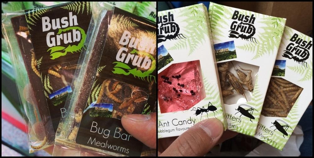 多種昆蟲的糖果非常熱門,麥基要留作紀念品收藏。