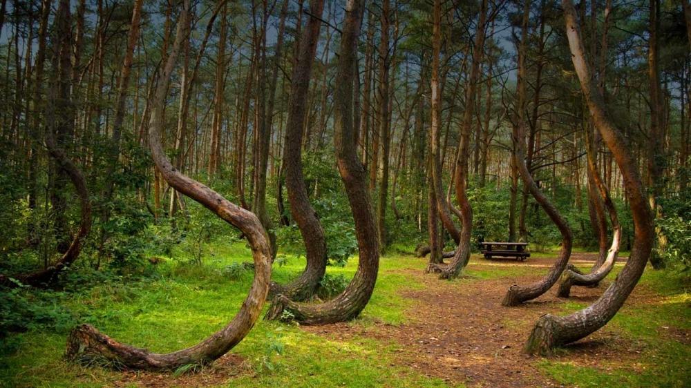 硬梆梆的樹幹也能超柔軟。圖片來源:I Start Something