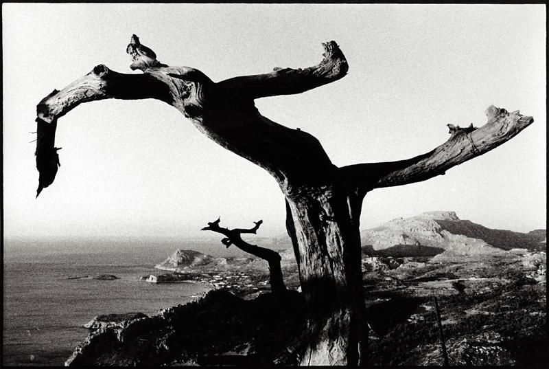 希臘羅德島上的樹金雞獨立姿勢十分優美,像不像在跳芭蕾舞?圖片來源:In search of lost pictures