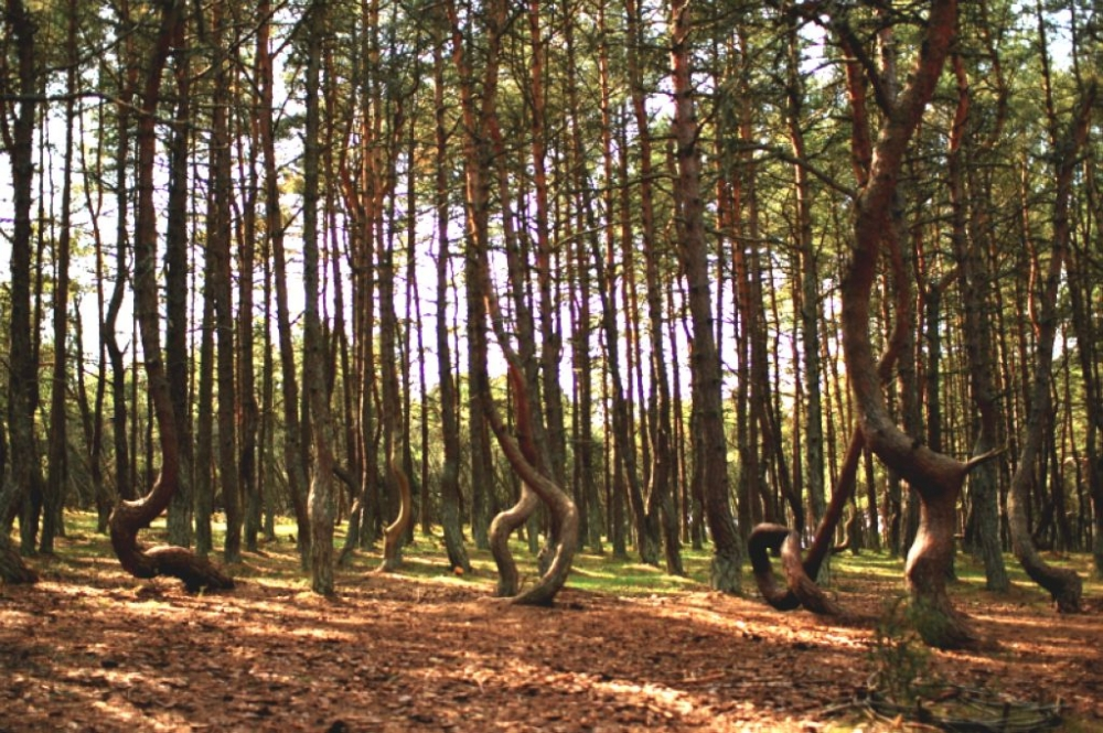 遠遠看像一群扭來扭去的樹人在開派對。圖片來源:Terrapapers