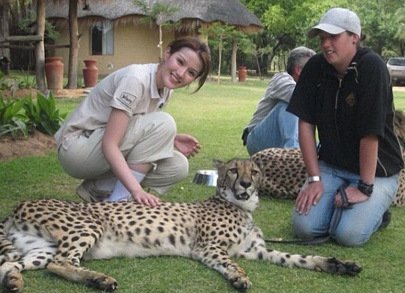 蘇盈之參觀野生動物園,近距離和花豹接觸。