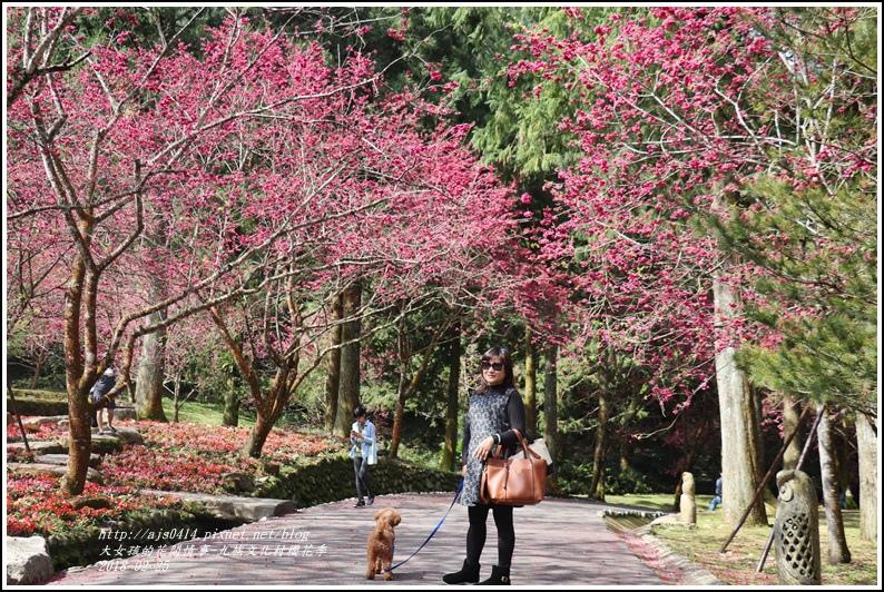 九族文化村櫻花季-2018-02-22.jpg