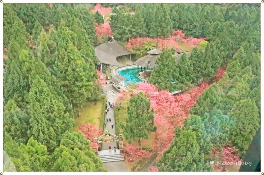 九族櫻花祭 (15).JPG