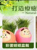 多肉植物_1