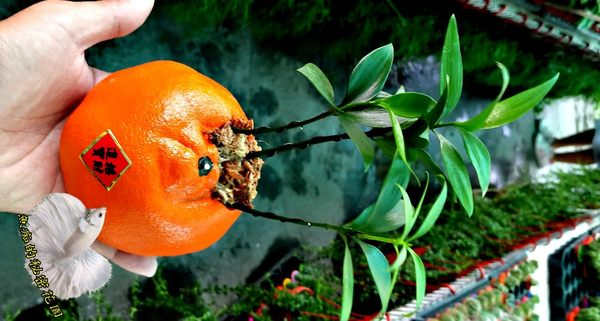 [桔祥如意 橘子造型竹柏盆栽] 活體植物 送禮組合盆栽