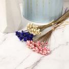 進口乾燥天然小星花-乾燥花圈 乾燥花束 不凋花 拍照道具 室內擺飾 乾燥花材-20元/10支
