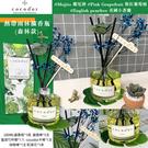 【盒裝-無花款】韓國Cocodor熱帶雨...