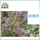 【綠藝家】K11.琉璃苣種子40顆...