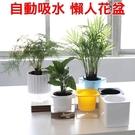 【JIS】N138 魔方懶人花盆 透明花...